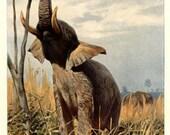 African Elephant, 1916, Large Vintage Animal Print, Lydekker, nearly 100 years old, Frameable Art, Library Decor, Wild Animal Art