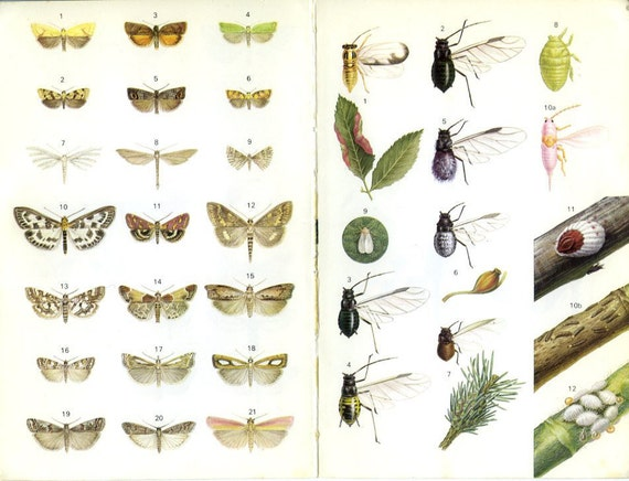Praying Mantis, Moths, Aphids, Scale Insects, Vintage Insect Print 13/20, 1973 Frameable Art, Entomology Print, Country Cottage Decor, Geek