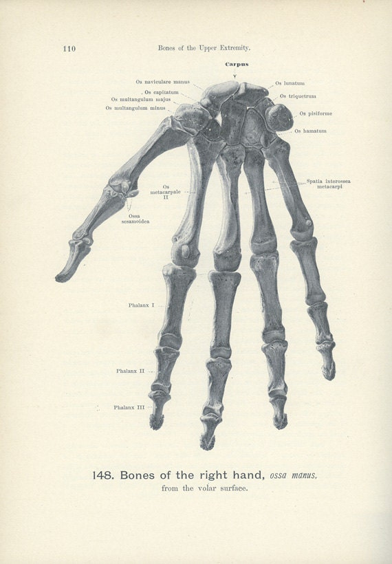 Skeleton Bones, 1906, Antique Hand Atlas Anatomy Print, Bones of the Right Hand (110) Weird, Quirky, Creepy, Skeleton, Gruesome