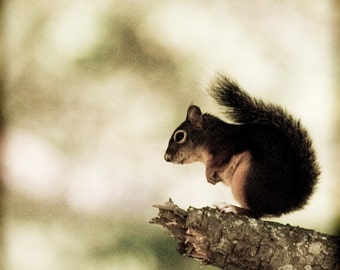 Squirrel Animal Photography - photography print - nature photography