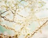 Flower photo white Cherry Blossom photograhy, 8x8 Fine Art archival print, Kodak endura paper Photograpghy, Eva Ricci. Title: Cherry Blosso