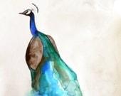Bird Painting - Wall Art - Peacock Painting - Original Watercolor - 16x20