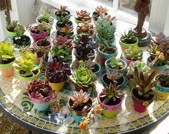 Wedding Favors - Small Flower Pots - Set of 100 - Outdoor Weddings - Garden Weddings