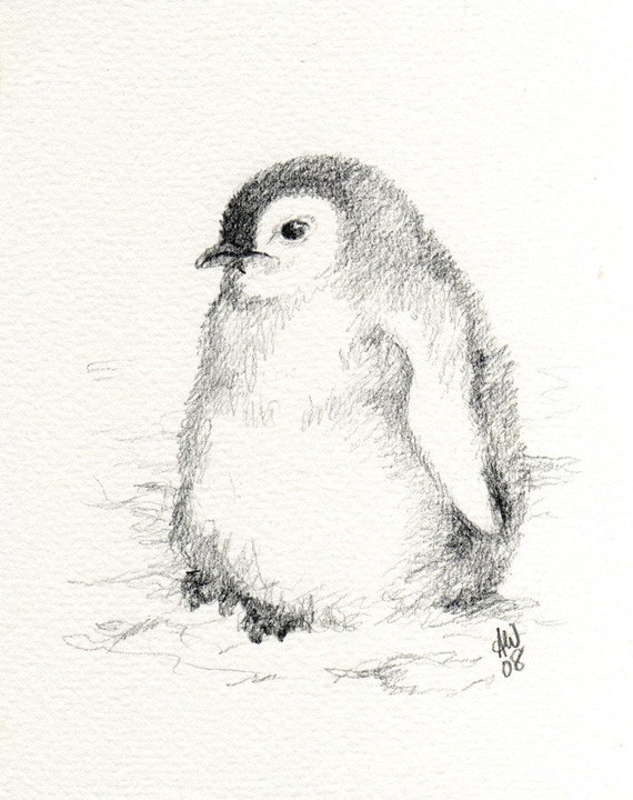 Penguin Sketches Related Keywords & Suggestions - Penguin Sketches ...