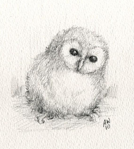 Baby Barn Owl Drawings Baby Barn Owl Original