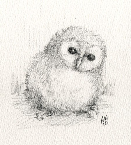Baby Barn Owl original pencil sketch