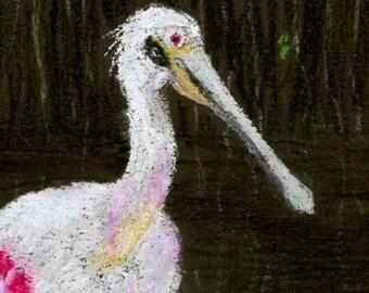 Florida Roseate Spoonbill Original Pastel Painting
