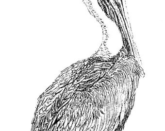 Florida Pelican Ink Drawing Embellished MiniPrint