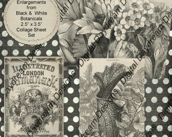 Instant Download Digital Printable Collage Sheet 2.5 x 3.5 ATC ACEO size - Black and White Almanac Botanicals