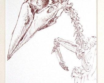 Avian Skeleton Study