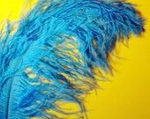 XL Turquoise Ostrich Plumes. 13-16 inches tall. EXCLUSIVE QUALITY.
