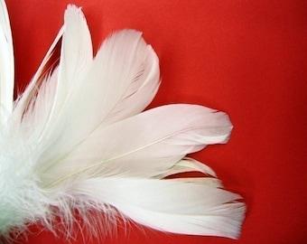 40 White XL Goose Feathers.
