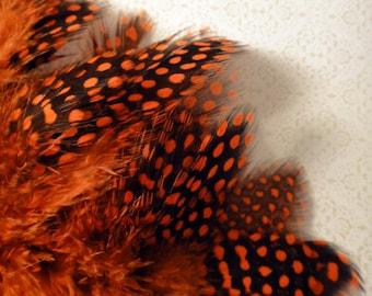 20 PCS / Orange / Strung Guinea Feathers / Dyed
