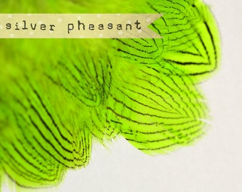 20-30 pcs - Silver Pheasant Feathers Strung - Charteuse Green