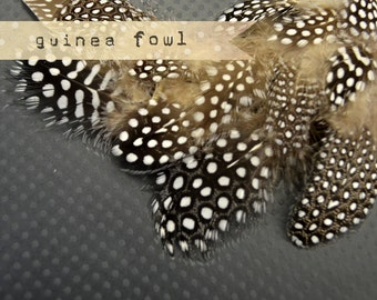 2 Dozen - NATURAL Guinea Fowl plumages, millinery and craft, feathers
