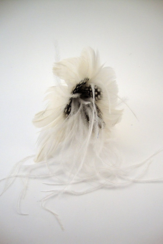 White Feathered Guinea Flower Plume.