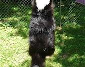 Tanned Wallhanger Skunk Pelt