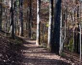 Leafy Path 11 x 14