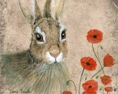 Bunny and Poppies greeting card