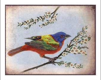 Painted Bunting 8x10 inch Giclee