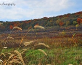 Autumn Field with Grain Grass in colors of Orange, Brown, Green, Red, Gold and Yellow with a Blue and White Sky in the Midwest