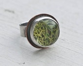 Sterling 15 mm Moss Terrarium Ring with Copper