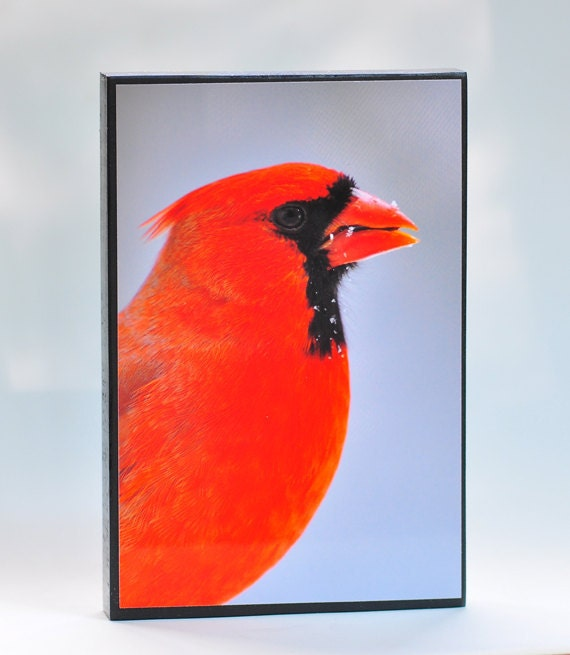 """Red Cardinal Wood Photo Block 4"""" x 6"""" Bird Photograph SALE SHOP CLOSING for Home Decor or for Bird Lover Nature"""