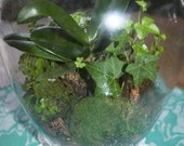 RESERVED FOR COURTNEY Orchid Living Glass Terrarium