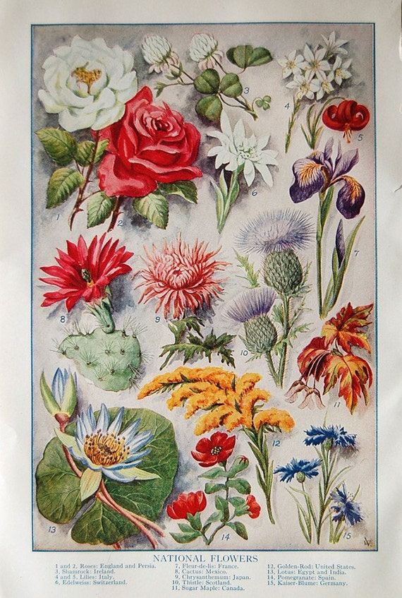Vintage Full Color 1920s Floral Fine Art Prints of State Full Bloom Spring Summer Flowers 4 Paper Pages Total.