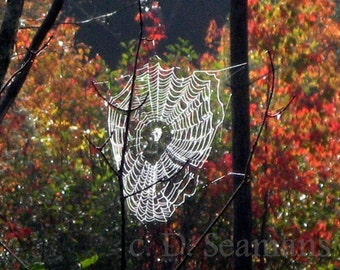 Autumn Cobweb in the Woods Note Card