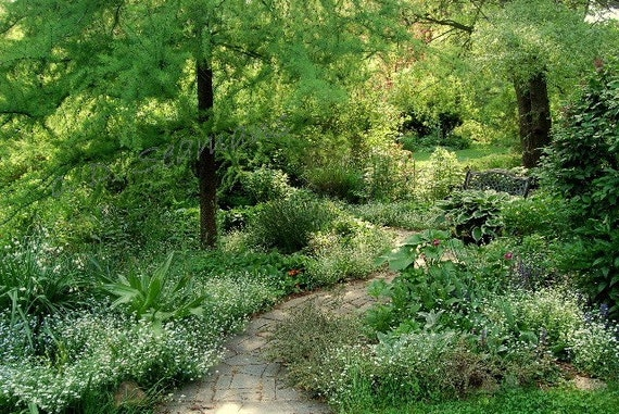 Tranquil Garden Path Photo/Note Card
