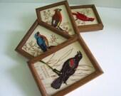 Complete Framed Vintage Embroidered Bird Wall hangings, Art, Folksy,