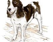 Tallulah The Dog