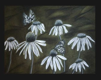 Black and White Butterflies and Coneflowers- Giclee Art Print 11x14