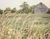 Rustic Barn Photograph - Golden Grass, Field, Farm, Soft Green, Country Farmhouse Decor - Fine Art Photography Print - A Country Summer