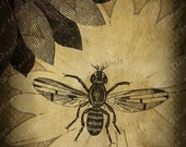ACEO Limited Edition Print - The Honey Bee - Digital Collage