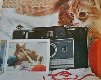 Kitten Plays with the Camera - 3 sizes to choose from - Framable print -1960s Polaroid ad gift for cat lovers - gift for polaroid buffs