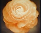 Ranunculus Art Prints - flower photography, Botanical Home Decor - orange, ethereal, feminine, floral, peach, girls room decor, garden art,