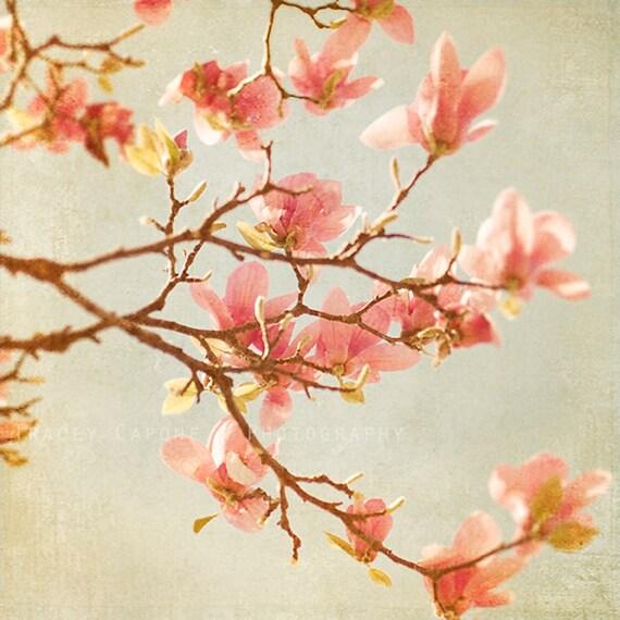 Magnolia Tree, Spring Decor, flower photograph, pink nursery decor, floral wall art print, botanical print, home decor, girls room,