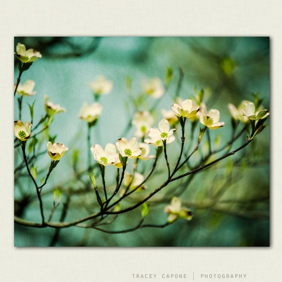Nature Print - fine art flower photography - wall art -  Ethereal - teal, butter yellow, girls room decor, feminine