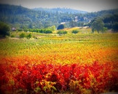 Autumn Vineyards - Gallery Wrap Canvas Photograph - landscape fall autumn vineyard wine country art print home decor photo photography
