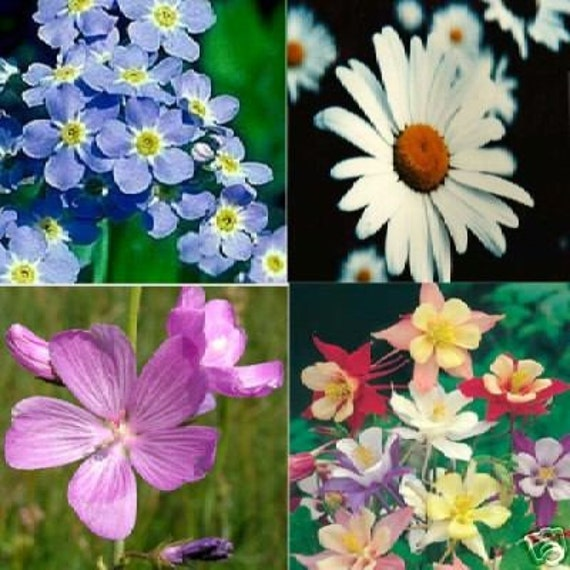 Gift Pack of 4 flower seed packets