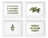 Leaves Collection 4 8x10 prints. Fine Art Photographic Natural History. Minimalist. Natural Home. Indoor garden botanical. Office decor