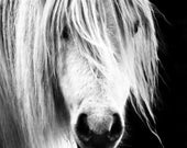 White Horse 12 x 8 Wildlife Fine Art Photographic Print