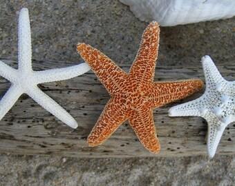 Starfish Hair Clips-Set of 3-Sugar Starfish, Knobby Starfish, Skinny Starfish-Beach Weddings, Mermaids, Style Me Pretty Feature