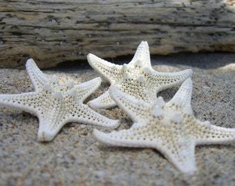 Starfish Hair Clips Barrettes-Set of 3 Petite Starfish Hair Barrettes-Beach Weddings,Mermaids,Mermaid Costume, Halloween Accessories,