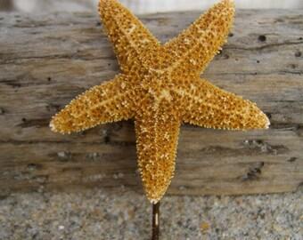 Starfish Hair-Sugar Starfish Bobby Pin-Petite-Mermaid Costume, Halloween, Beach Weddings, Destination Weddings, Starfish Hair