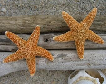 Starfish Hair Set of 2,Beach Weddings, Starfish Hair Clips, Mermaid Costume, Destination Wedding, Sea Life, Ocean Theme Hair Clips, Sea Star