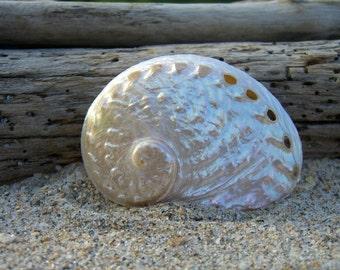 Seashell Abalone Hair Clip or Barrette-Mermaids, Beach Weddings, Seashell Barrette, Ocean, Summer Vacations