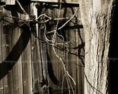 Rustic Door 8x10